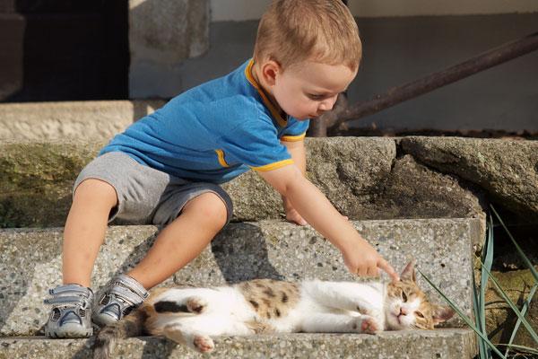 Не дергай кота за хвост: как дети учатся общаться с живым миром