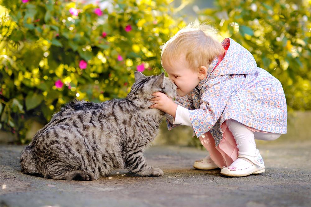 De un gato puedes contraer tuberculosis