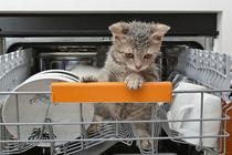 Посудомойка: 6 ошибок, которые допускают владельцы