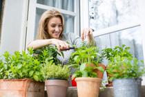 3 совета, как обустроить мини-огород у себя дома