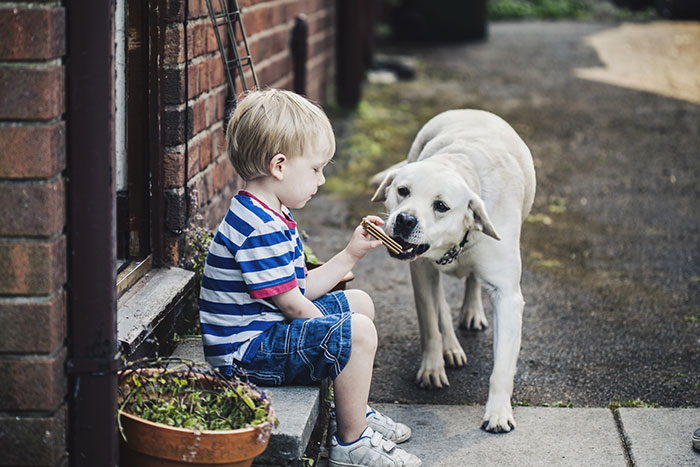 5 dangerous misconceptions about the friendship of a child and a dog