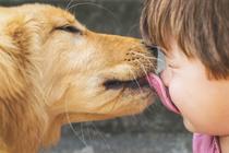 Чем нас могут заразить животные?