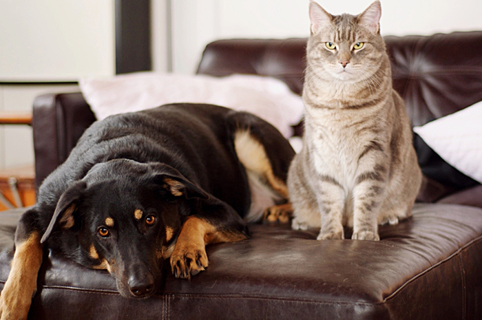 9 things that pets teach us