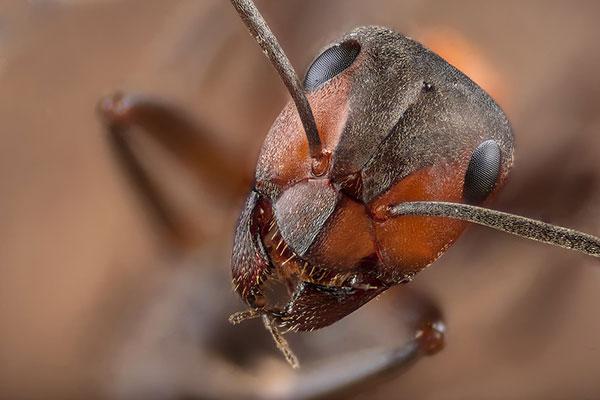 Cómo proteger a un niño de los insectos de verano.