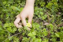 Знать «врага» в лицо: ядовитые растения рядом с нами