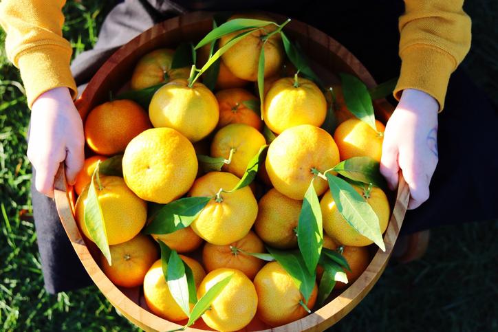 Гид по мандаринам:учимся различать сорта!